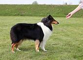Mistress trains her dog
