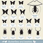 silhouettes - beetles and butterfly