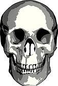Monochrome vector graphics - human skull