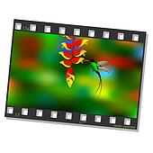 Film frame with hummingbird