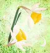 grunge daffodil wild flowers illustration spring fresh image