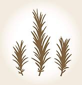 Retro stylized rosemary stub isolated on white