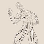 Vector Muscle Anatomy