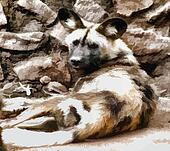 Vector Image African Wild Dog with Big Ears