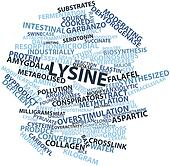 Word cloud for Lysine