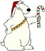 Polar bear holding a candy cane