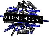 Word cloud for Biomimicry