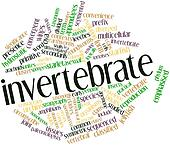 Word cloud for Invertebrate