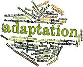 Word cloud for Adaptation