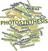 Word cloud for Photosynthesis