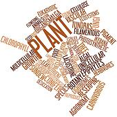Word cloud for Plant