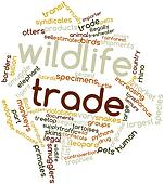 Word cloud for Wildlife trade