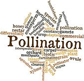 Word cloud for Pollination