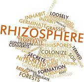 Word cloud for Rhizosphere