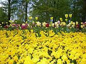 Flores e tulipas