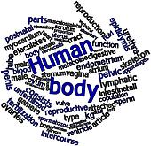 Word cloud for Human body