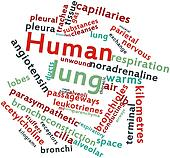 Word cloud for Human lung