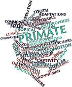 Word cloud for Primate