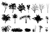 Silhouette trees and plant