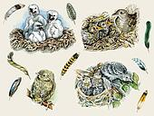 Feathers, nestlings