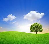 Green Field with big tree and blue sky