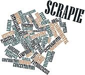 Word cloud for Scrapie
