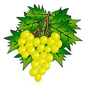 Bunch of Grape with vine leafs isolated on white background