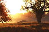 Autumn Sunset / Sunrise at Lake 3D