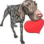 vector dog Kurzhaar breed holding a red heart