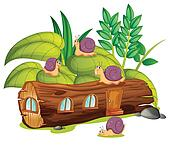 Snails and a wood house