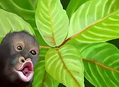 A Chimpanzee Monkey on Green Leaves Background