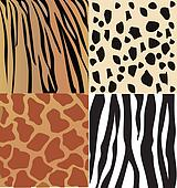 Set of wild animals skin vector