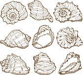 Hand drawing seashell set