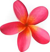 Plumeria Stock Illustrations - GoGraph