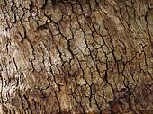 Tree bark background texture pattern.