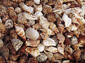 Tropical background with sea shells grunge texture.