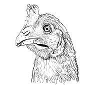 Outline sketch illustration of chicken head