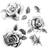 Flower sketch set