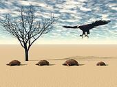eagle and turtlec3