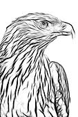 drawing of eagle