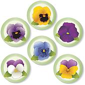 Pansies and Johnny Jump Ups Buttons