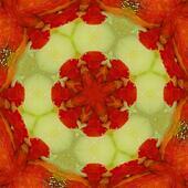 Hot pepper kaleidoscope