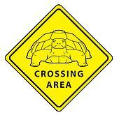 Turtle Crossing Area