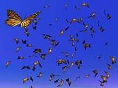 Monarch butterflies migration - 3D render