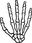 human skeleton hand