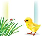 Grass and baby chick background