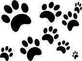 Different Sized Paw Prints