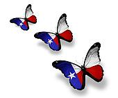 Three Texas flag butterflies, isolated on white