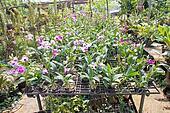plant green house garden orchid flower nursery