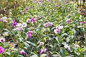 plant green house garden orchid flower nursery